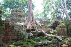 Kambodża - Angkor - Ta Prohm
