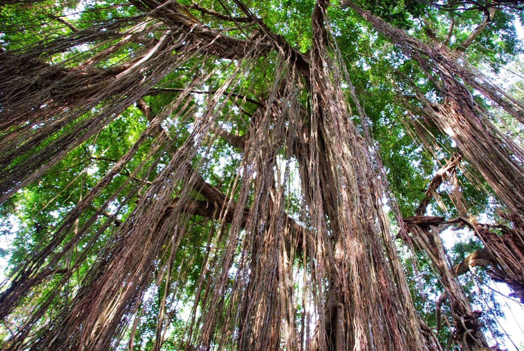 Bali - Ubud - Monkey forest