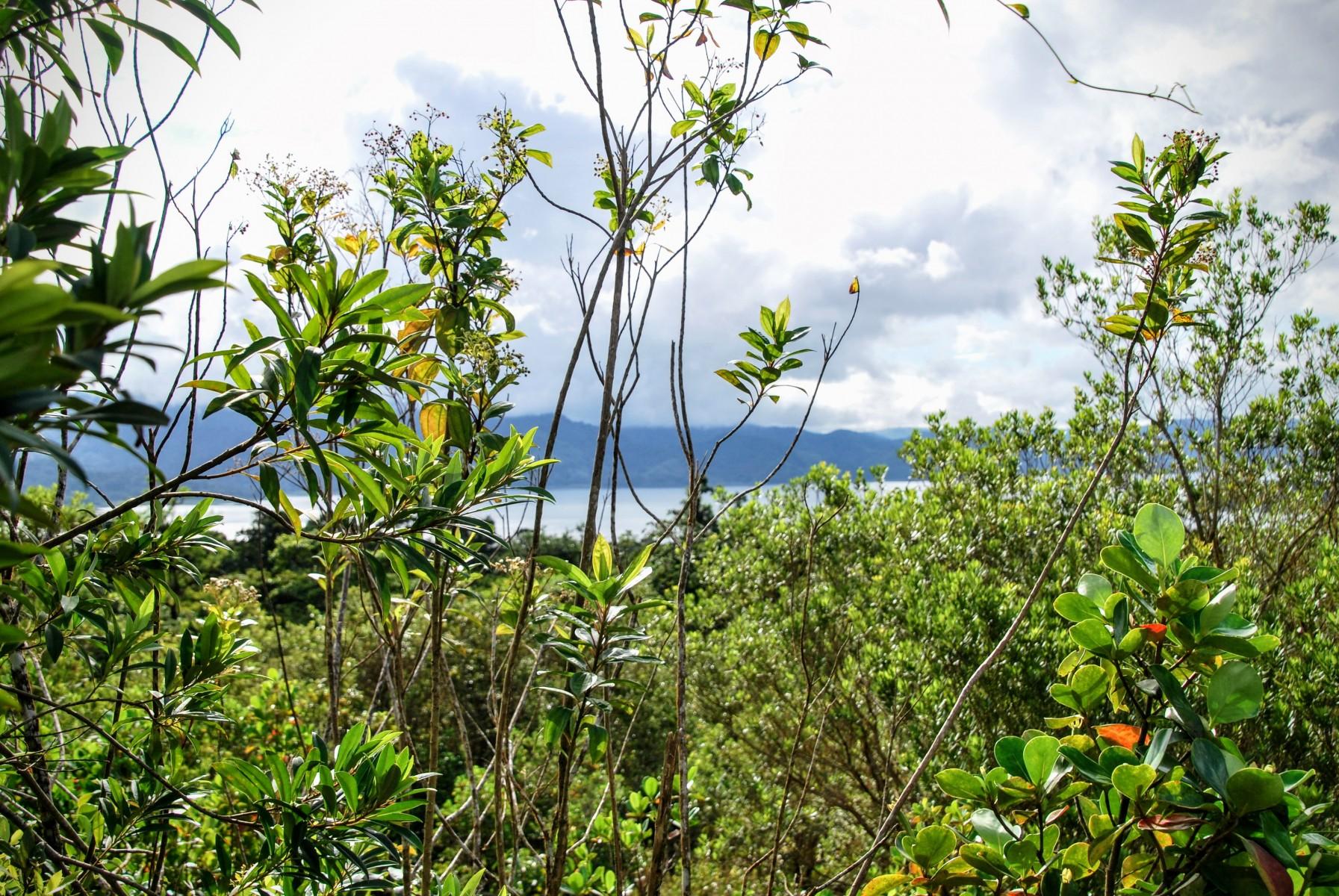 Parque Nacional Volcán Arenal