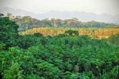 Parque Nacional Madidi