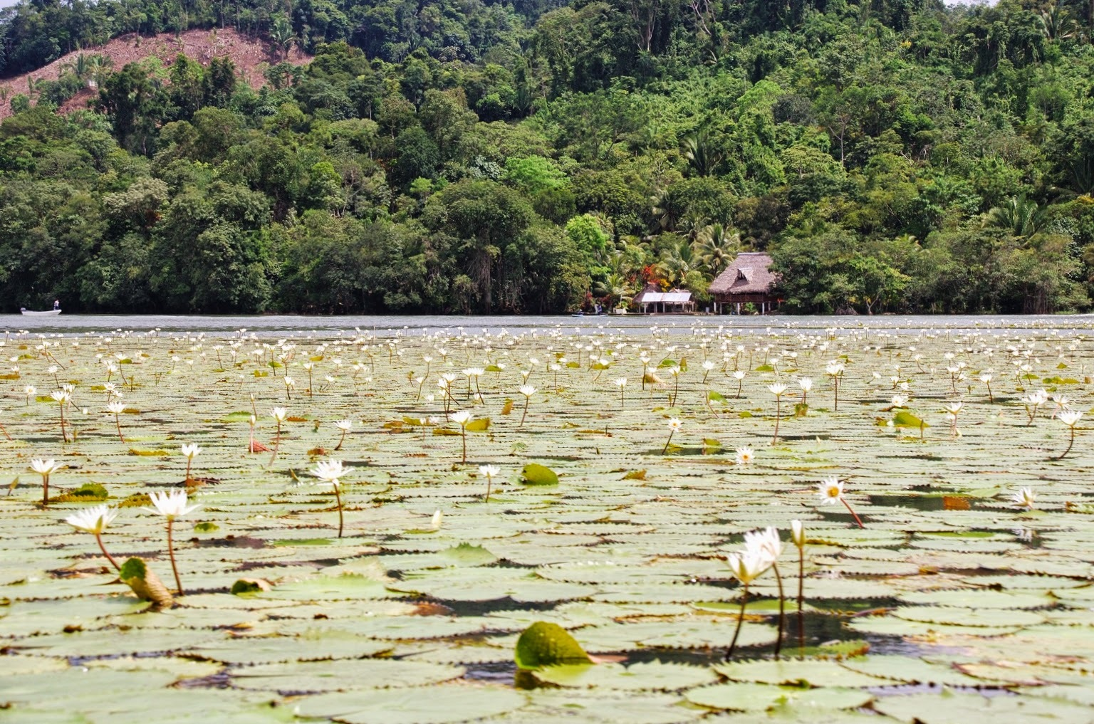 Gwatemala - Livingston - Rio Dulce