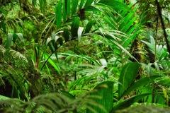 Gwatemala - Rezerwat Biotopo del Quetzal