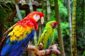 Honduras - Park Macaw Mountain