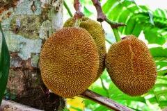 Bali - jackfruit