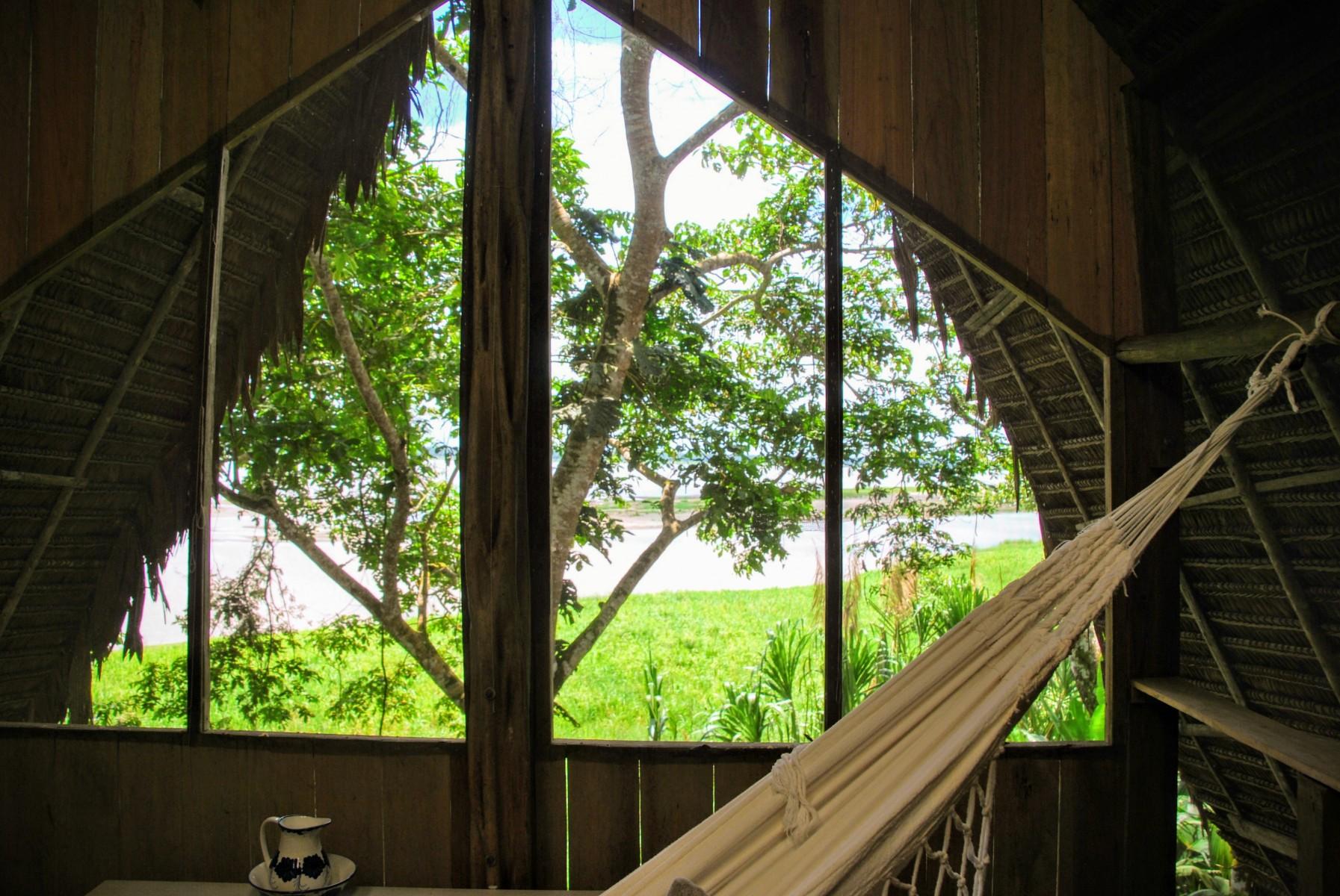 Amazonka (Calanoa)