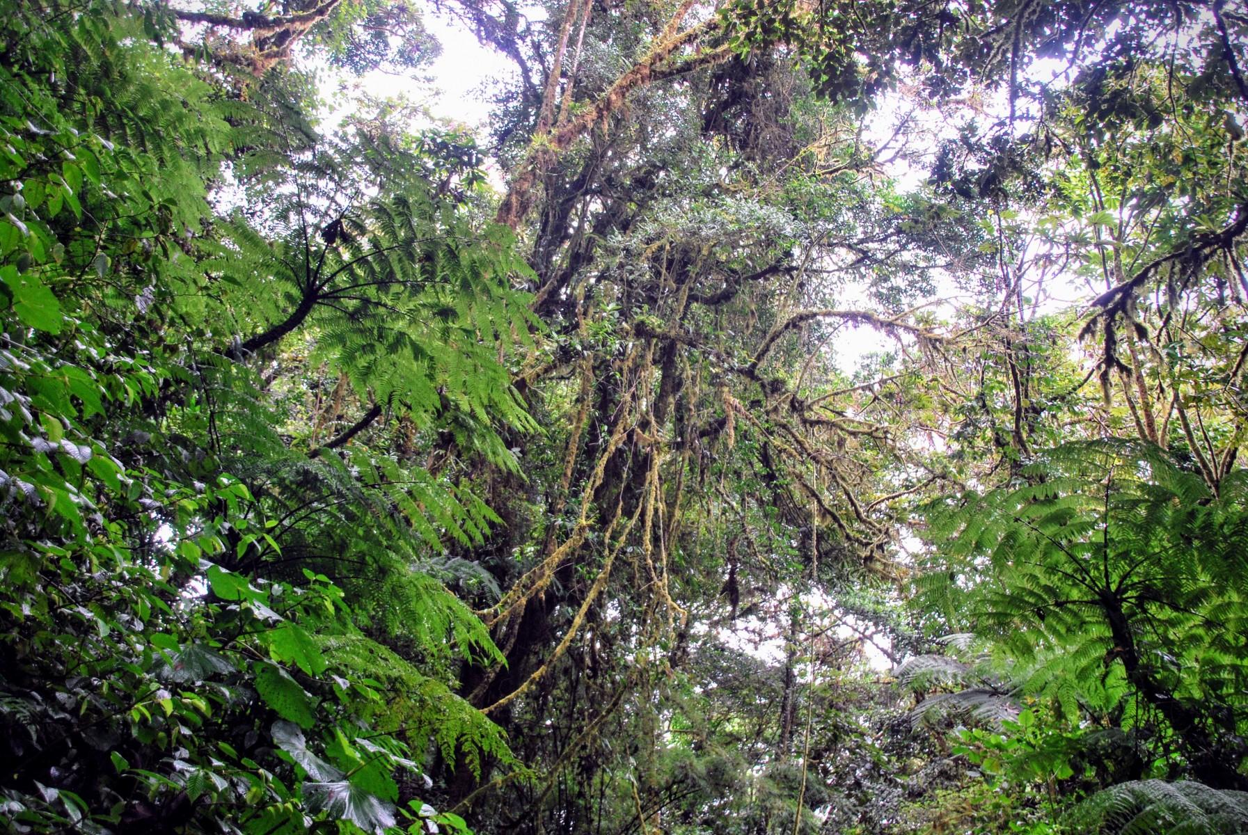 Reserva biológica Bosque Nuboso Monteverde