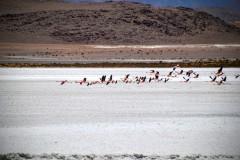 Reserva Nacional de Fauna Andina Eduardo Avaroa