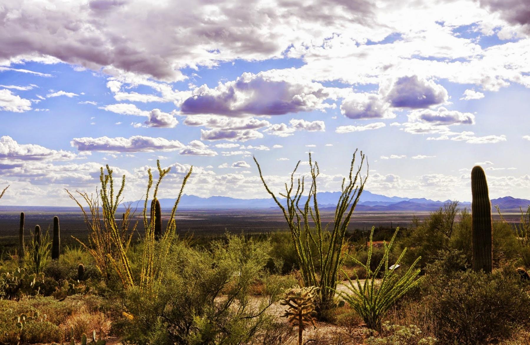 Arizona - pustynia Sonora